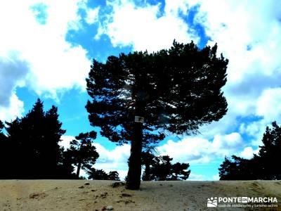 Garganta del Arroyo de Minguete - Puerto de Fuenfría;las mejores rutas de senderismo en madrid